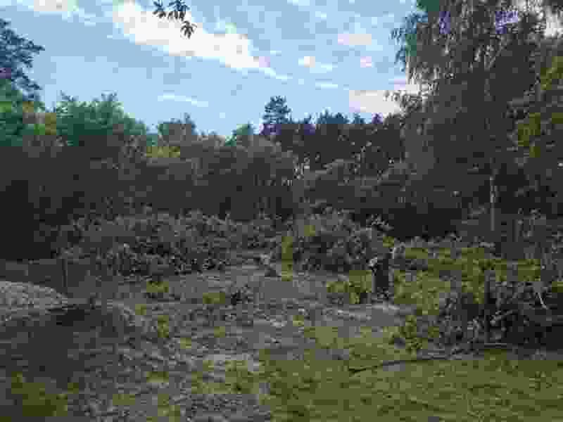 В Пригородном лесу вырубают деревья под застройку