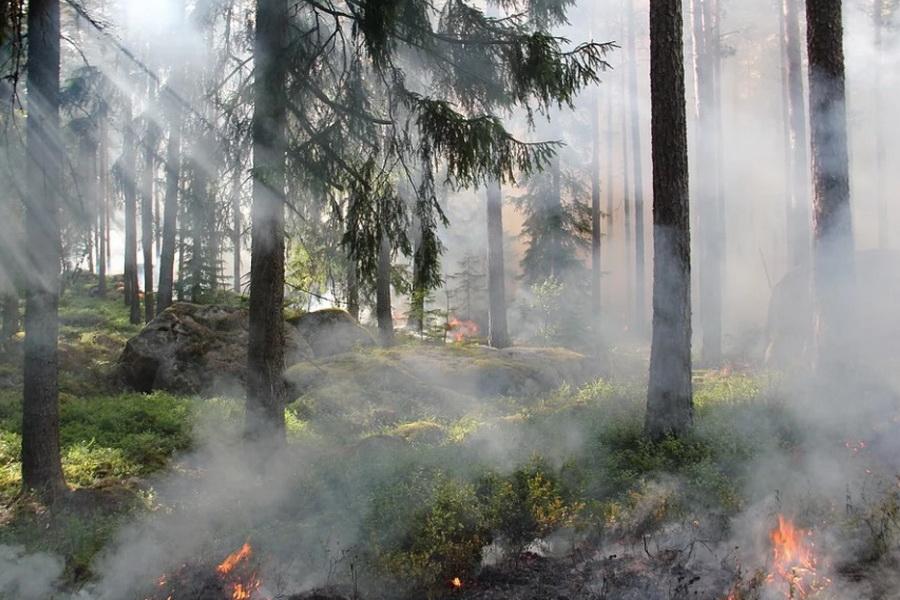 В Тамбовской области 18 июня прогнозируется высокая пожарная опасность