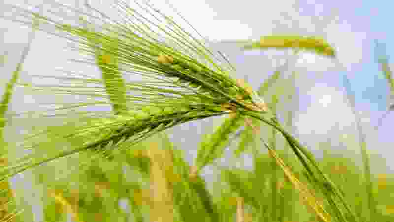 В Тамбовской области гендиректор сельхозфирмы уклонился от налогов на 19 млн рублей