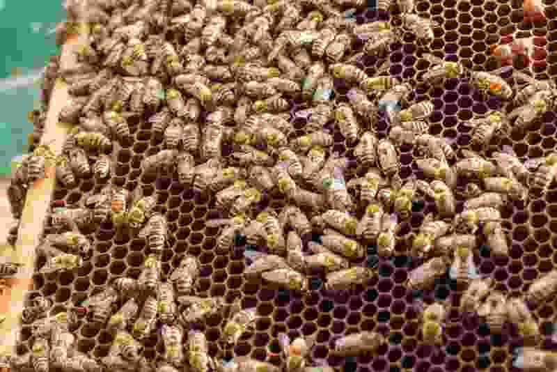 В Тамбовской области пчеловод потерял около 200 семей после химической обработки местных сельхозугодий