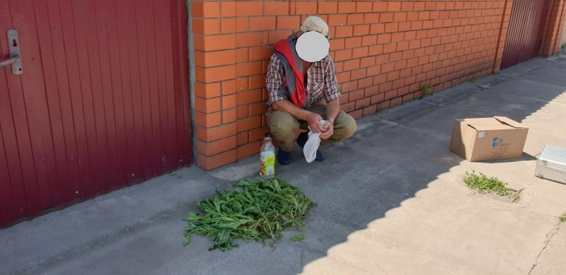 Житель Тамбовской области высадил у себя на огороде плантацию мака и вырастил там сотни цветов