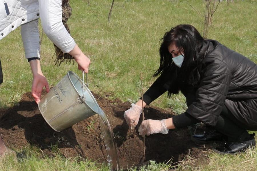 """Благодаря тамбовчанам участники акции """"Сад памяти"""" высадили 27 миллионов деревьев"""