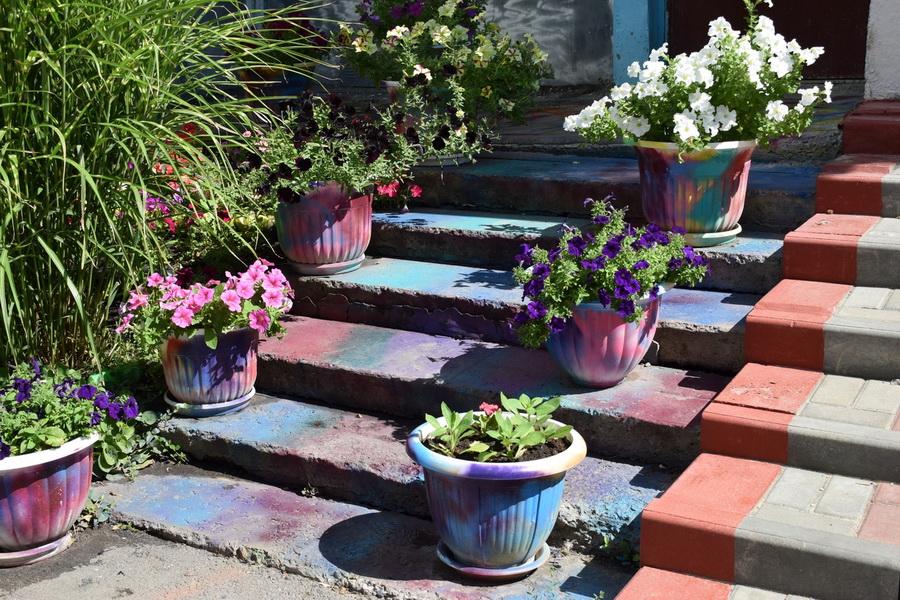 До 17 августа принимаются заявки участников конкурса на лучшее украшение дома цветами