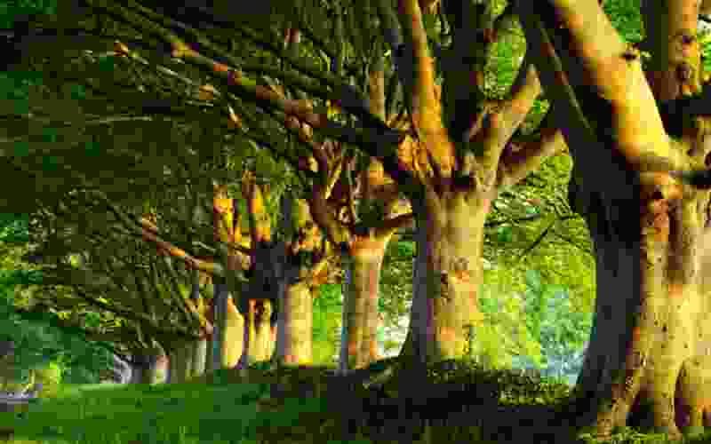 На Тамбовщине высадили больше 500 тысяч деревьев в память о погибших в Великой Отечественной войне