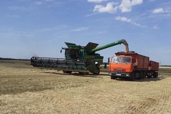 Половина районов Тамбовской области приступили к уборочным работам на полях