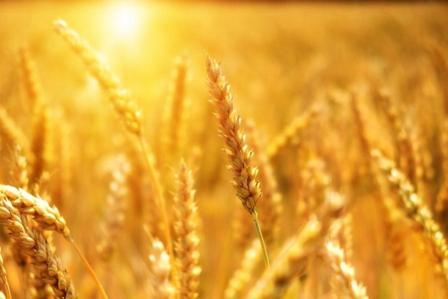 Тамбовская область обеспечена продуктами питания собственного производства