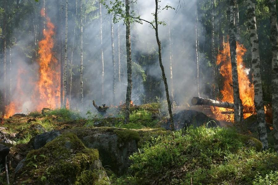 В четырёх районах Тамбовской области ожидается V класс пожарной опасности