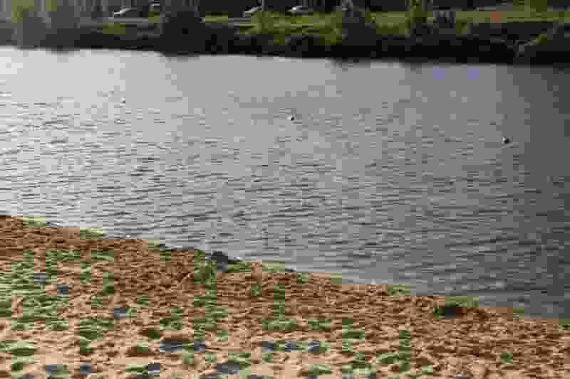 В Моршанском районе купающиеся обнаружили утопленника