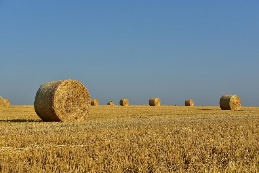 В регионе заготовлено более 50 тысяч тонн сена, сенажа и силоса