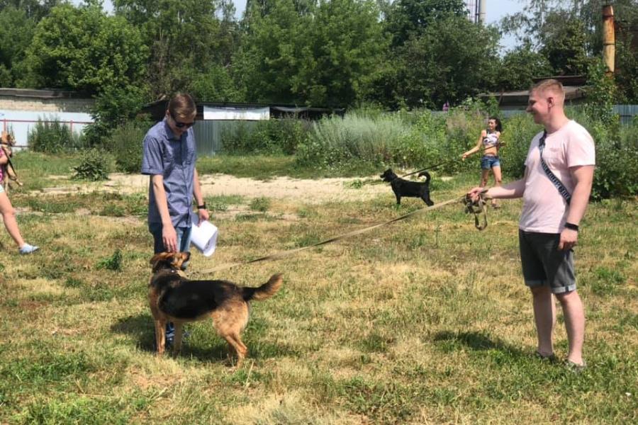 В Тамбове прошли акции в поддержку гуманного отношения к животным