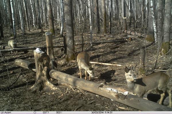 За полгода тамбовские охотинспекторы провели почти 1,9 тысячи рейдовых мероприятий