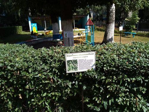 Ботанический сад для воспитанников детского сада