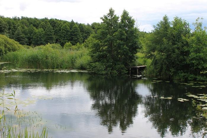 В Никифоровском районе хотят восстановить 130-летний парк