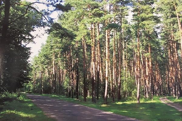 В Тамбовской области эффективно работает система обнаружения лесных пожаров