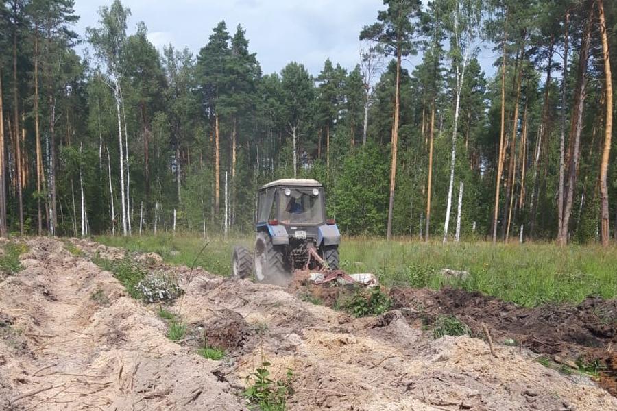 В Тамбовской области началась работа по сохранению лесов