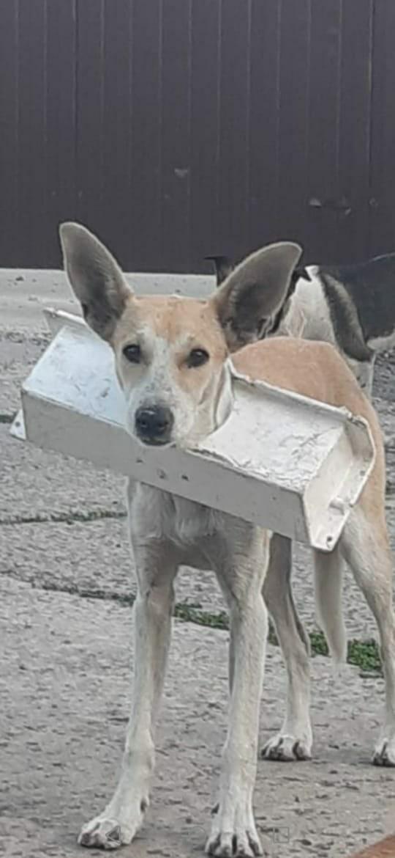 Волонтёры в Тамбове пытаются помочь собаке с пластиковым коробом на шее