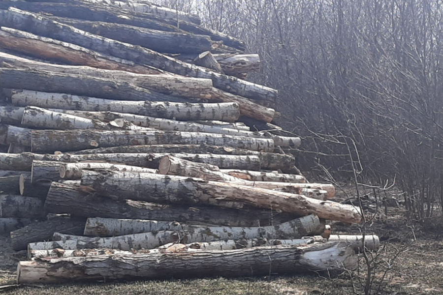 Житель Жердевского района незаконно вырубил более двух тысяч деревьев