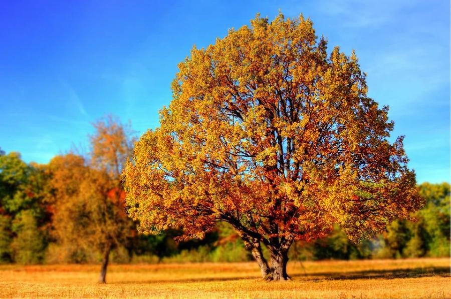 Астрономическая осень наступит 22 сентября