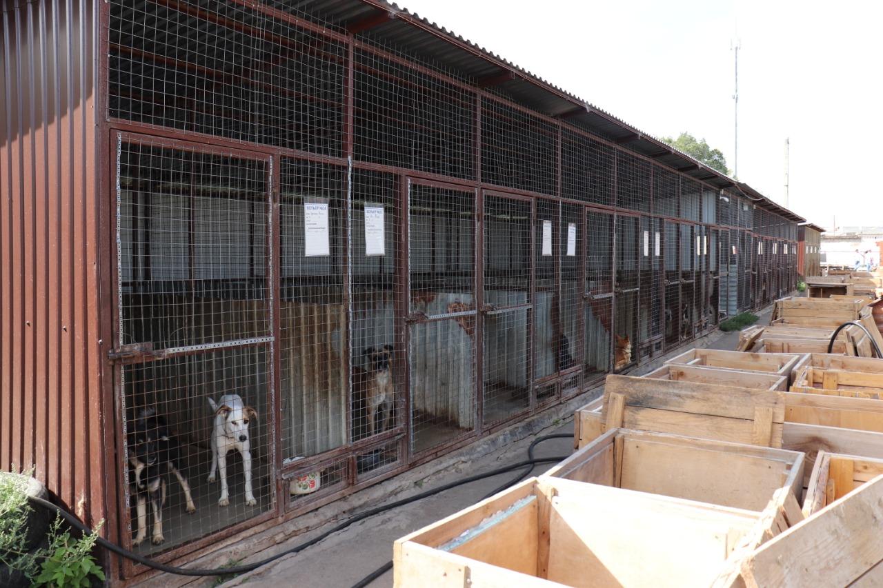 Для питомцев из тамбовского приюта передали более 40 кг корма