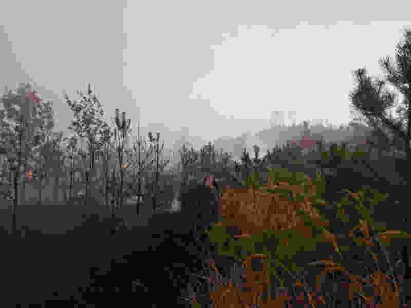Крупный лесной пожар под Тамбовом тушили всю ночь