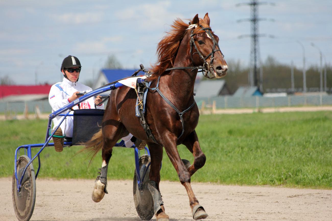 Лошади, спортсмены и театралы: афиша мероприятий от «Блокнот Тамбов»
