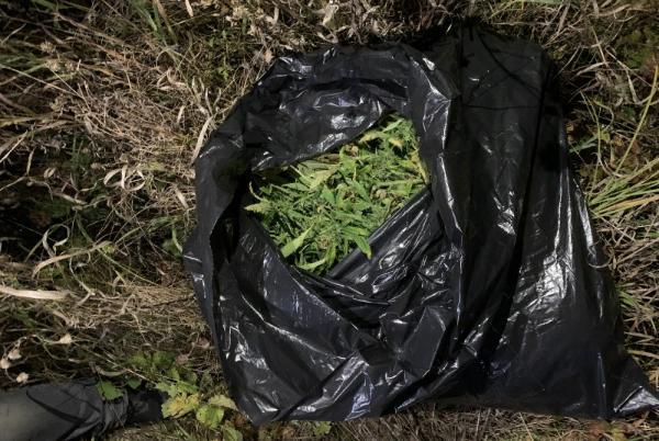 Плантацию конопли обнаружили в Первомайском районе