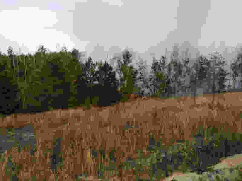 Под Рассказовом горит лес
