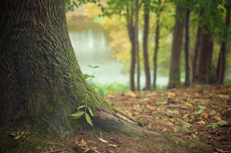 Тамбовчанам на 20 дней запретили посещать лес