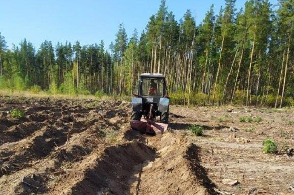 Тамбовские лесоводы готовят участки для высадки молодых деревьев