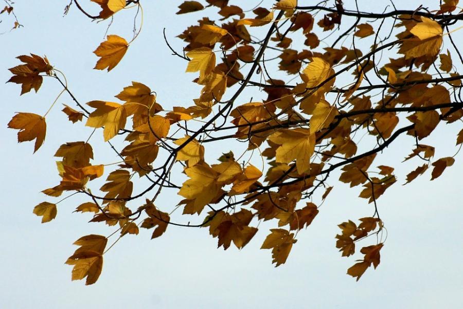 В ближайшие три дня в Тамбовской области ожидается усиление ветра