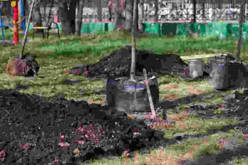 В Мичуринске до конца сентября высадят около 300 новых деревьев