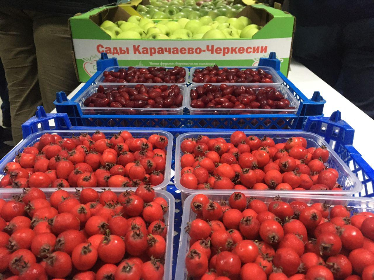 В Мичуринске открыли первую в стране интеллектуальную лабораторию хранения ягод