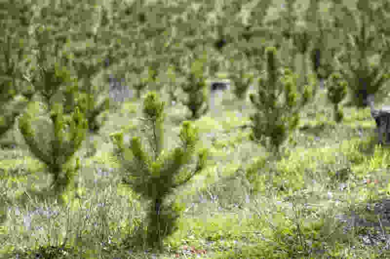 В регионе расчищают пространство под новые леса