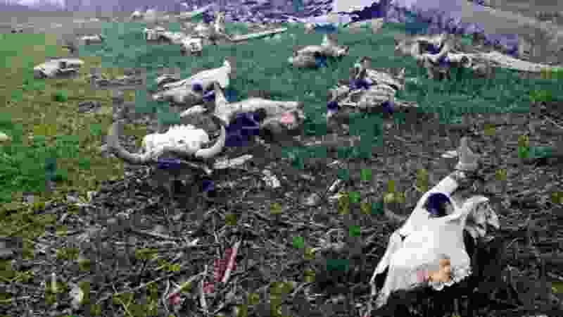 В Тамбове на скотомогильнике сотрудники МБУ утилизировали биологические отходы с нарушениями