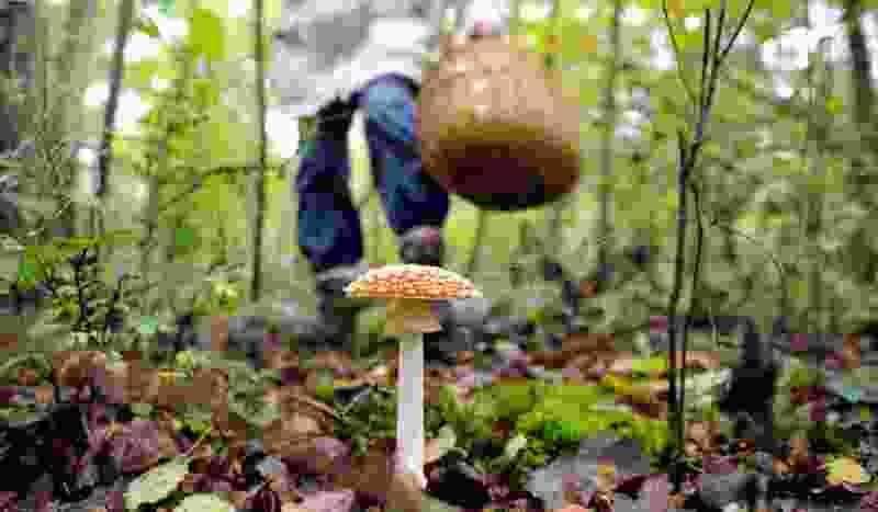 В Тамбовской области 10 человек отравились грибами