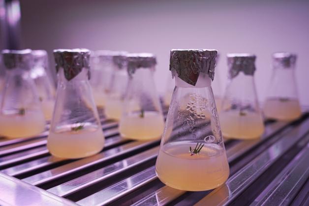 В ТГУ открылась Лаборатория биотехнологии лесных культур