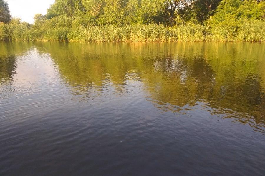 За неделю в водоёмах Тамбовской области утонули пять человек