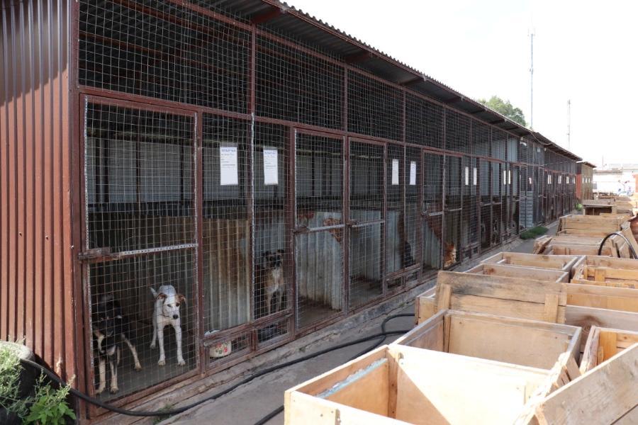 Жители Тамбовской области просят открыть приют для животных