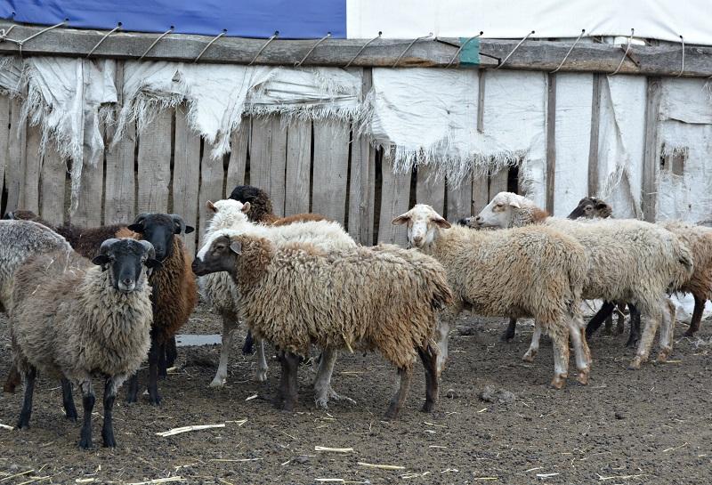 Глава Рассказовского района посетил крестьянско-фермерское хозяйство в селе Новгородовка