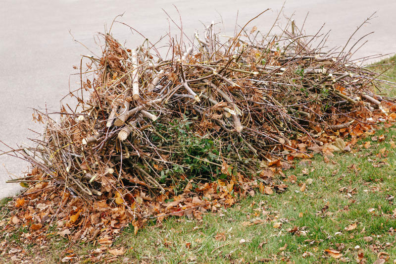 Минприроды разъяснило, кто должен убирать тамбовские улицы от листьев и веток