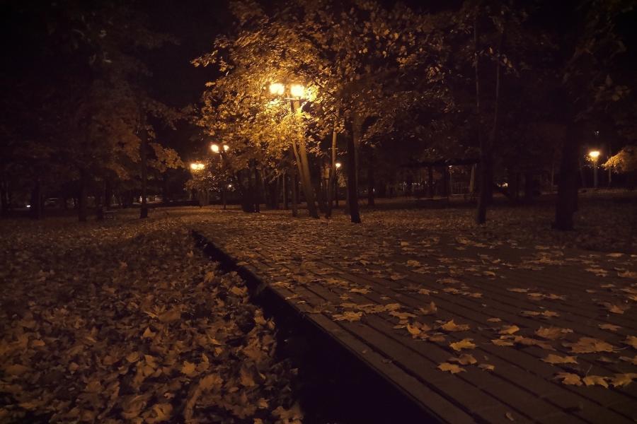 Ночной обзор: гибель животных на Камчатке, захоронение Ленина, идеальный способ варки яиц