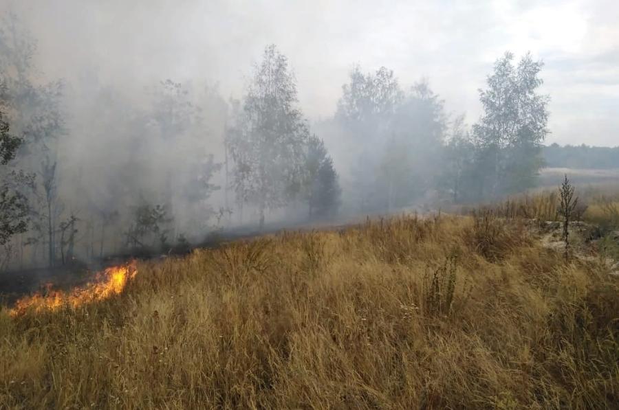 Противопожарный режим в Тамбовской области продлили до ноября