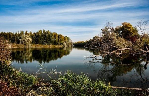 Расчистку реки Лесной Тамбов планируют провести в течение 10 лет