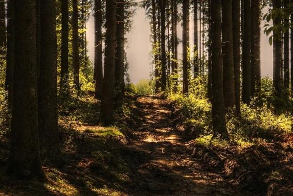 Синоптики рассказали, когда закончится сезон лесных пожаров