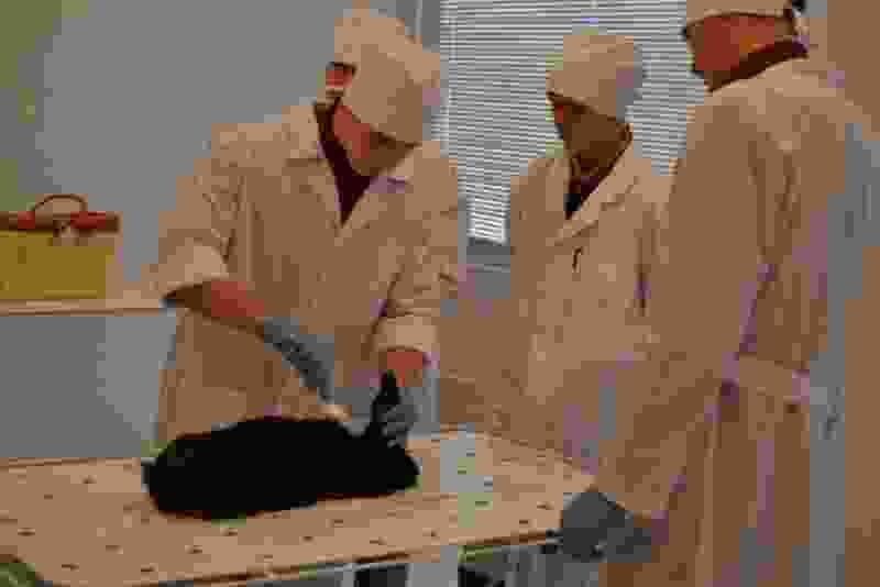 В МичГАУ открылась кафедра ветеринарии