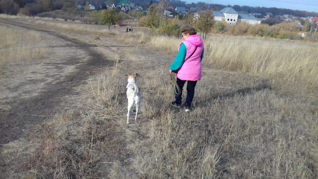 В Тамбове обсудили вопросы строительства площадки для выгула собак