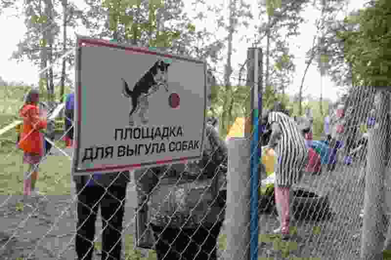 В Тамбове появятся три площадки для выгула собак