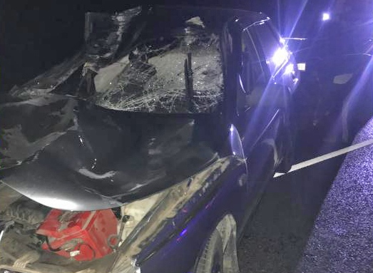 В Тамбовском районе мужчина на легковушке сбил корову: водитель в больнице