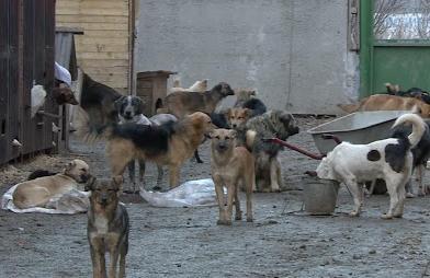 Проблему с бездомными собаками в Тамбове будут решать волонтёры и зоозащитники