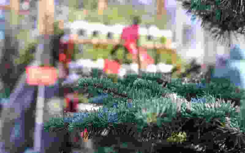 Скоро начнут работу новогодние ёлочные базары